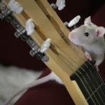 初心者からでもOK!横浜で効率良く学べる安いギター教室30選