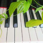 初心者の大人でも池袋で効率よく学習可能な安いピアノ教室23選
